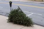 curbside-tree