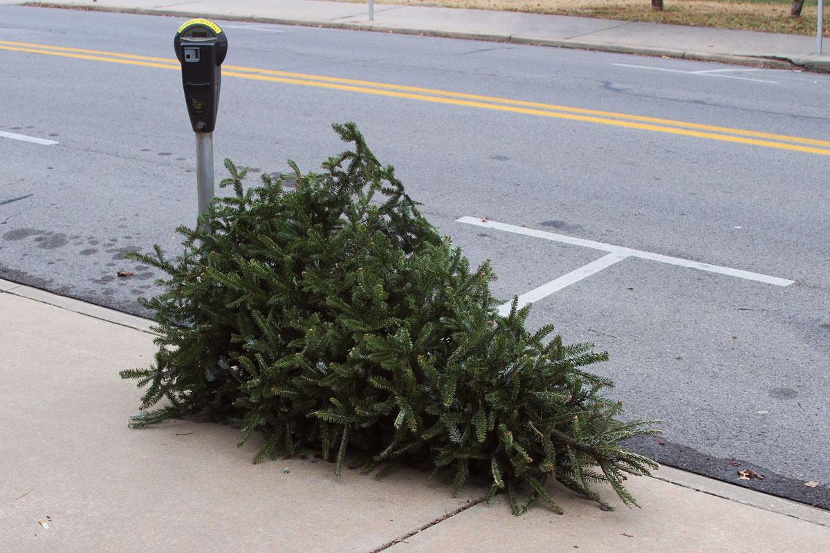 Christmas tree pickup available through January in Fayetteville ...