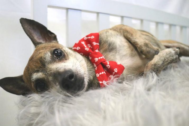 Columns For Sale >> Fayetteville animal shelter offers free adoptions on Aug ...