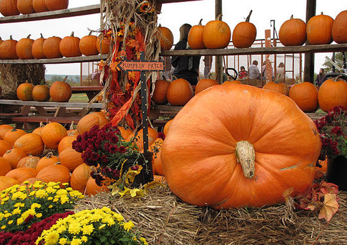 Pumpkin patches, corn mazes, petting zoos, and more open