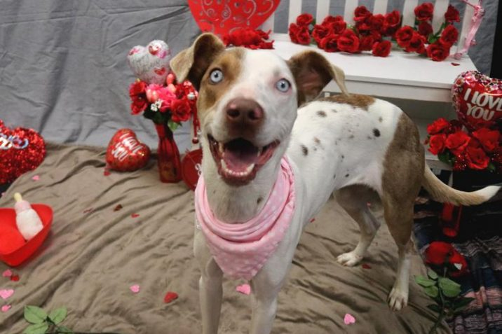 Valentine's Day Puppy-Grams return for 2020 in Fayetteville